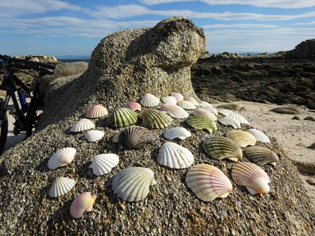 Beachcombing: Scallop Shells