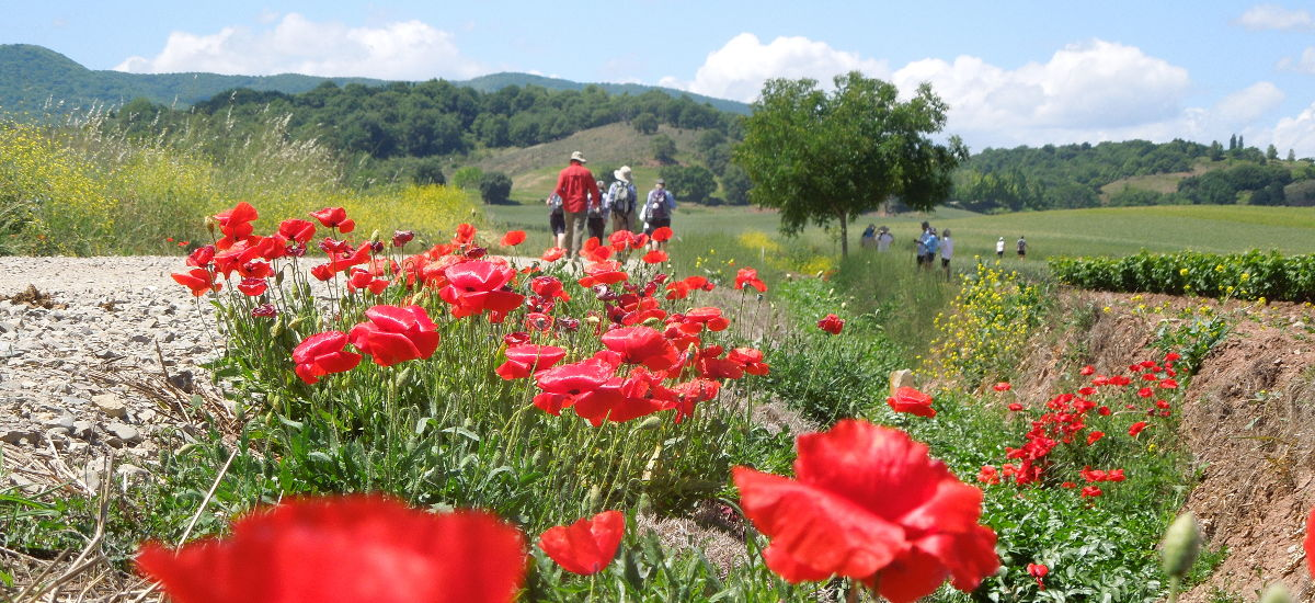 Camino de Santiago pilgrimage tours and hiking vacations in northern Spain!