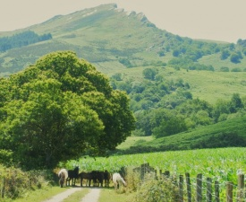 French Basque Country with Horses